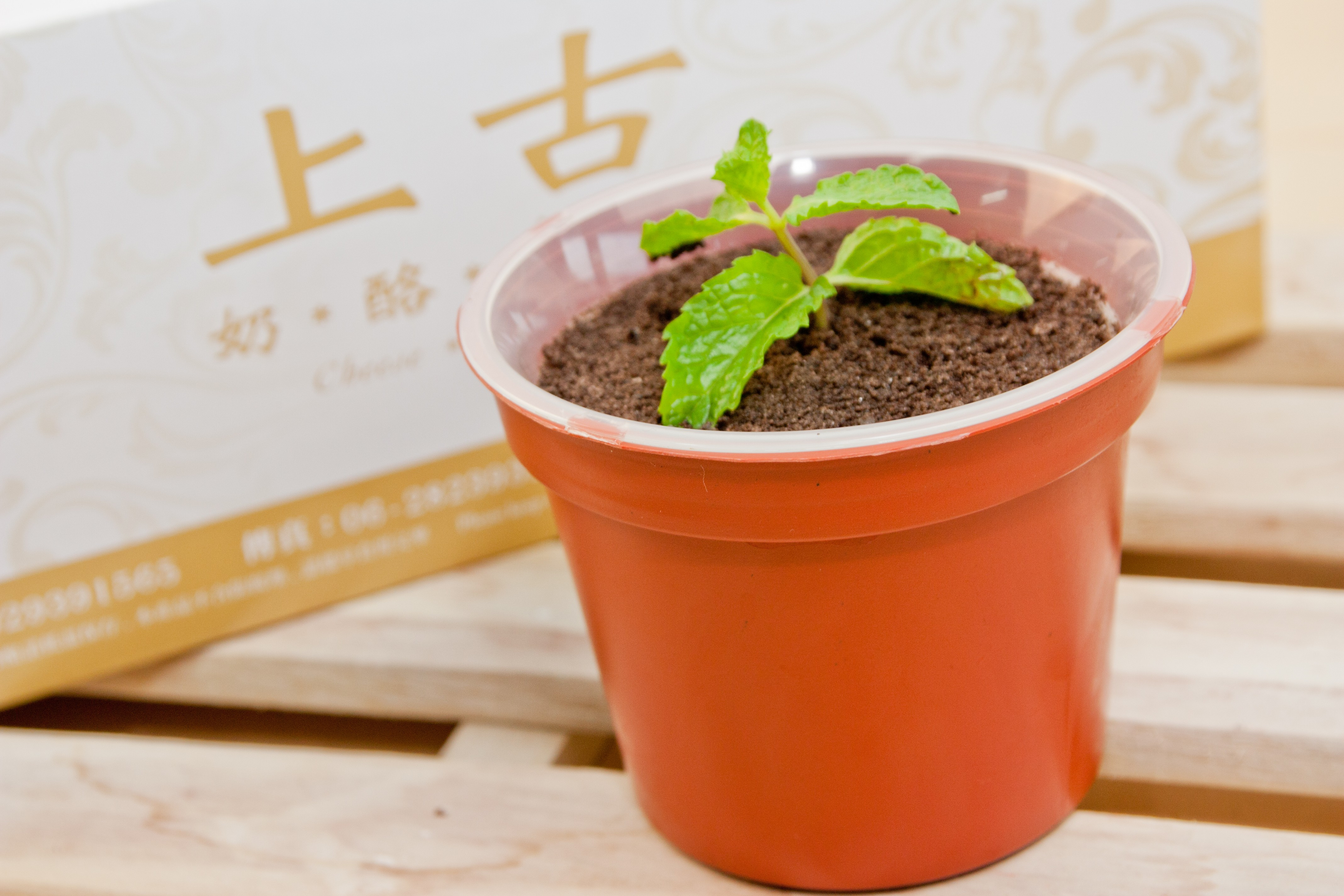 盆栽提拉米蘇(冷藏)